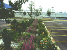bioretention_parking_lot.png